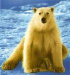 SELIMUT InternalPolar Bear